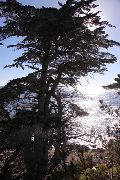 Glares Ocean Pine Trees Reflection Selfie Sunshine Tree Tree Trunk Water Seventeen Miles California