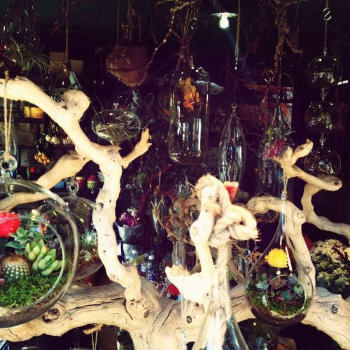 I wish I was a fairy and could live in one of these Cool Plants Notoriginal