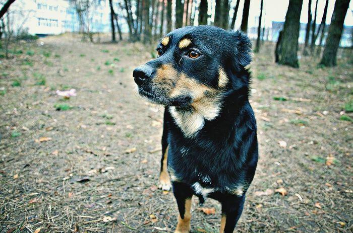 my doggy.