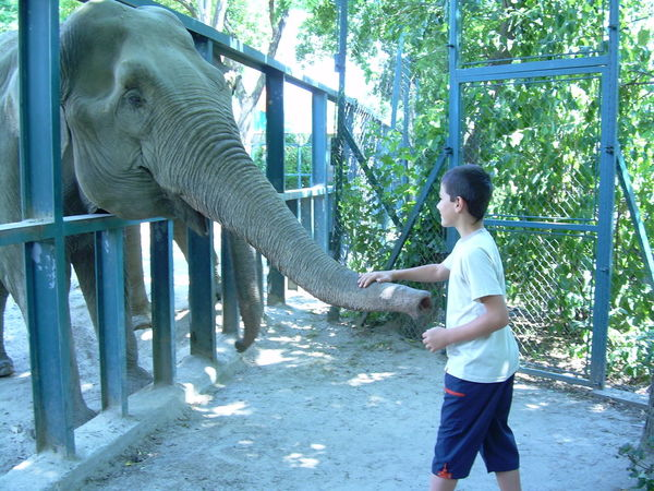 Elephants In The Zoo Park Make Friends New Friends