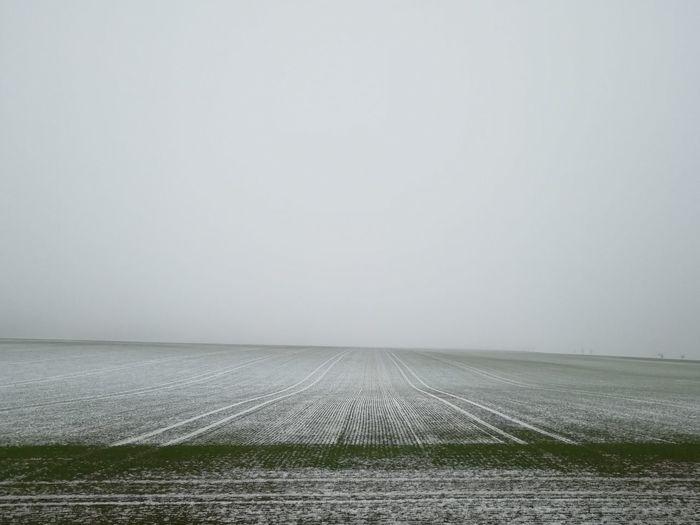 Snow ❄ Foggy