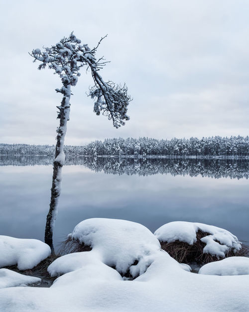 Scenic landscape with tree trunk and lake at winter evening in Finland Moment Of Silence Nature Pine Reflection Winter Beauty In Nature Blue Cold Cold Temperature Frozen Ice Lake Landscape Nature No People Outdoors Scenics Season  Snow Tranquil Scene Tranquility Trunk Water Weather Winter