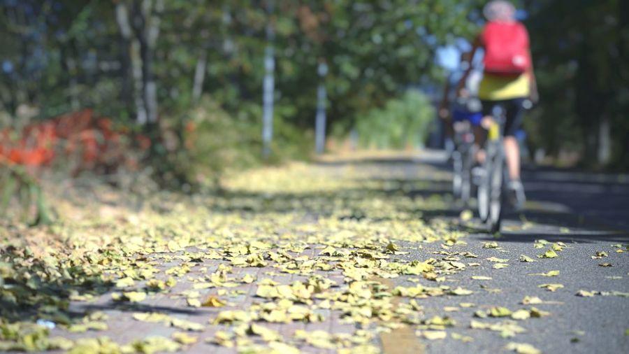 inspiring me... Naturelovers Humaninterest Springtime Leaf Bicycle Road Adventure Autumn Mountain Bike The Way Forward Riding