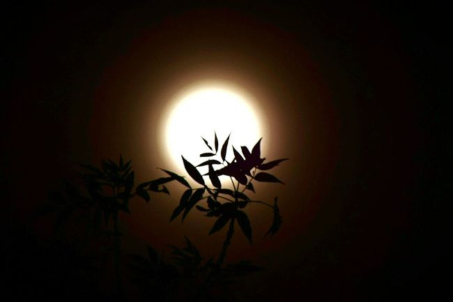 Close-up Plant Night Black Background Illuminated Sky Sun Bright Space Magical Solar Eclipse Perspective Beauty