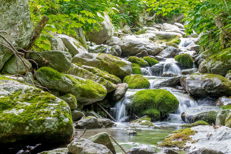 Adventure Beauty In Nature Day Green Color Growth Hike Nature Nature No People Outdoors Relaxing Rock - Object Scenics Summer Trail Tree Vermont Water Waterfall Waterfalls Woods The Week On EyeEm