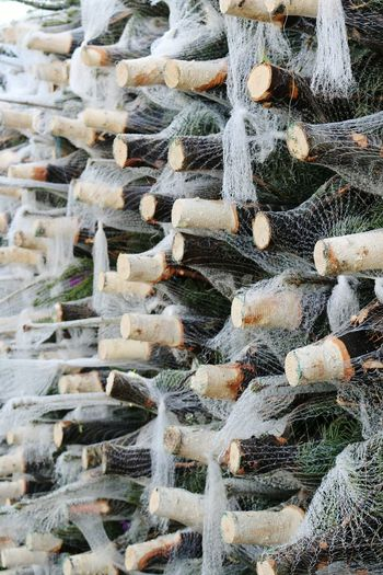 Christmas Tree Made From Wine Bottles