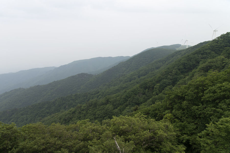 Samyang Ranch at Daegwanryeong in Gangwondo, South Korea Beauty In Nature Day Environmental Conservation Forest Landscape Mountain Nature No People Outdoors Plant Samyang Ranch Scenics Sky Tranquility Tree Wind Power Wind Turbine Windmill
