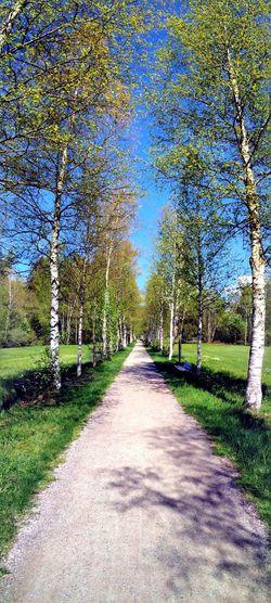 Birken Allee in Isny Panorama Ansicht