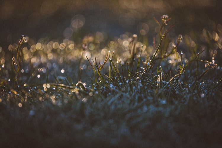 Close-up of wet grass on land