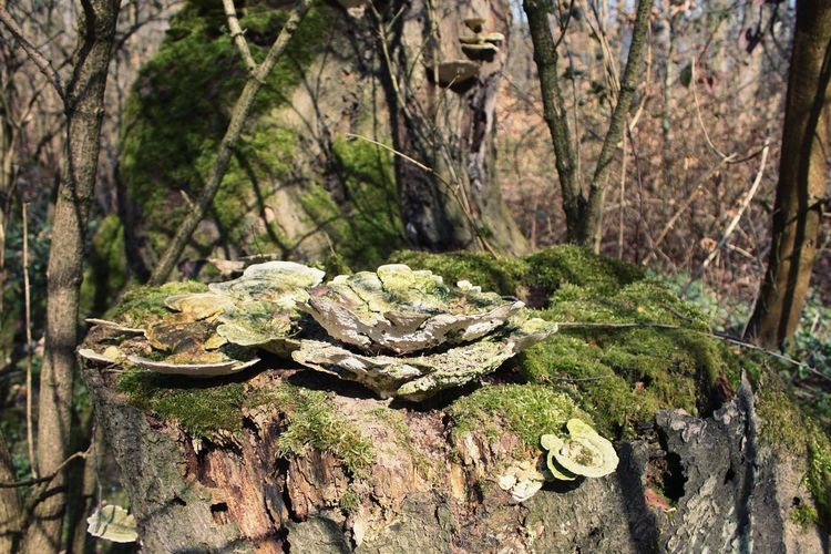 Wood Trees Mushrooms Mossy Sunny Afternoon Walking Around Inthewoods Beautiful Nature J'aimeLaNature Nature Photography