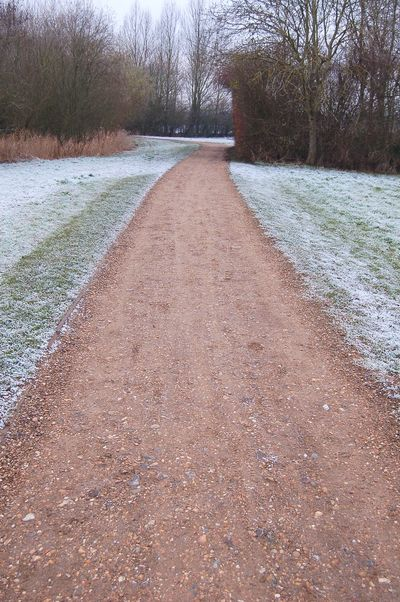Frosted Path Path Frost Frosted Winter Cold Weather Cold Weather Shades Of Winter The Way Forward Day Nature No People Outdoors Tranquility Tree Beauty In Nature