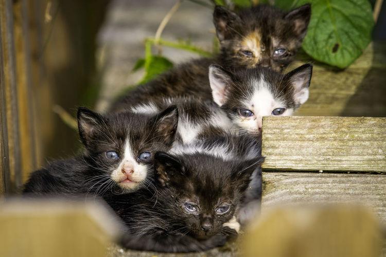 Animal Baby Cat