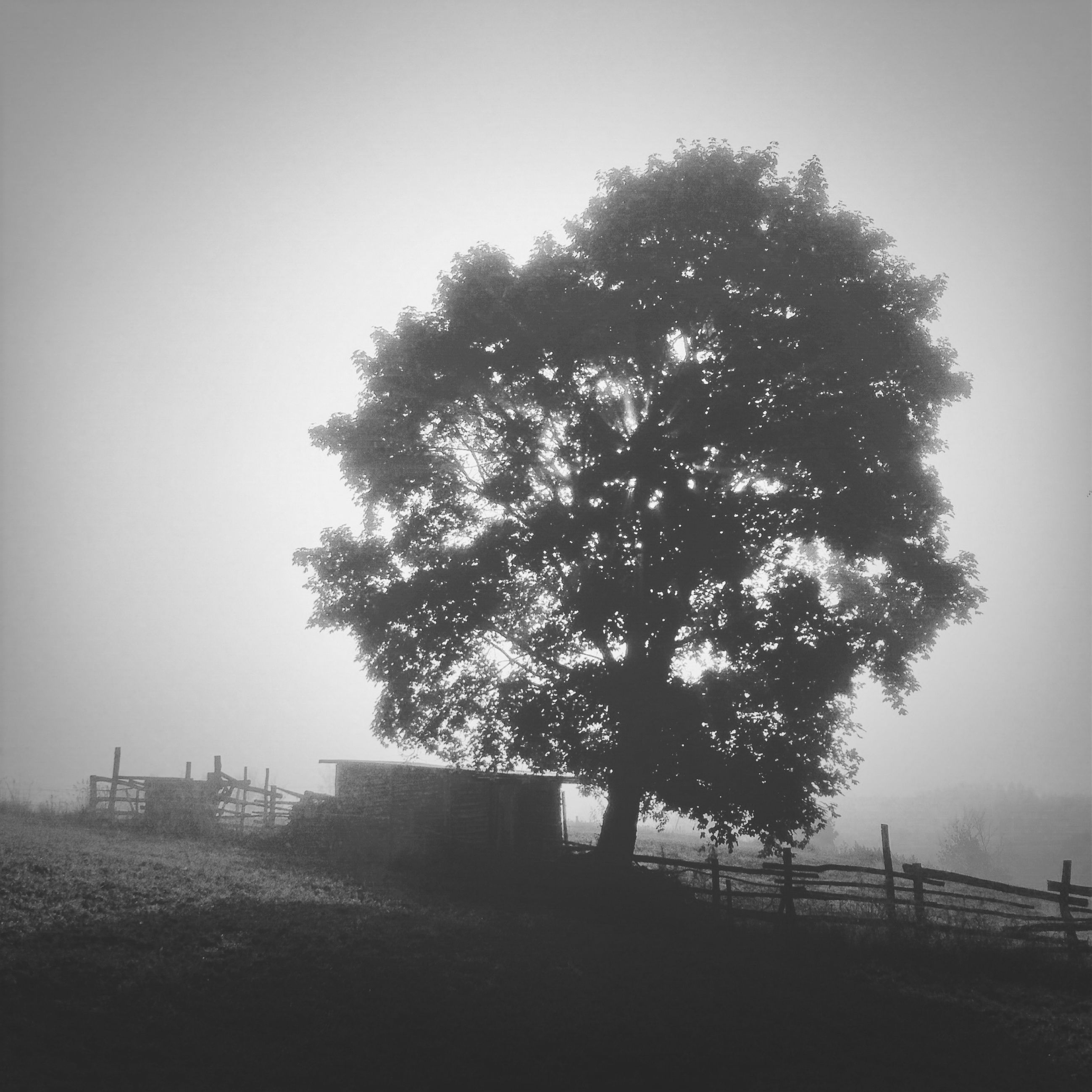 tree, clear sky, copy space, tranquility, fence, landscape, field, tranquil scene, nature, foggy, railing, sky, beauty in nature, scenics, bare tree, growth, outdoors, built structure, no people