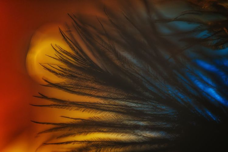 Ostrich feathers macro