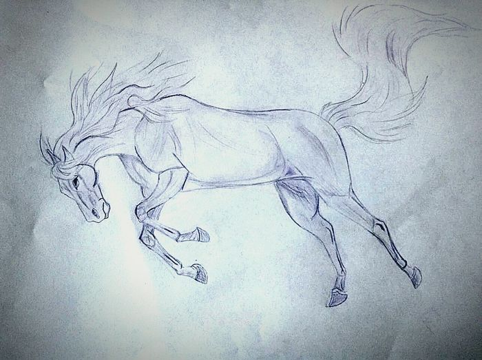 Horse Art, Drawing, Creativity My Drawings