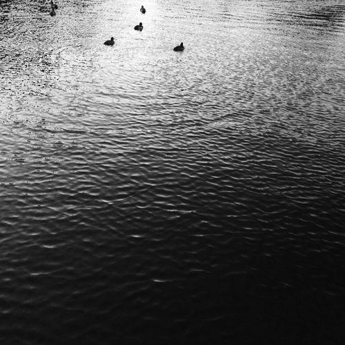 Black And White Streetphoto_bw Japan Nature