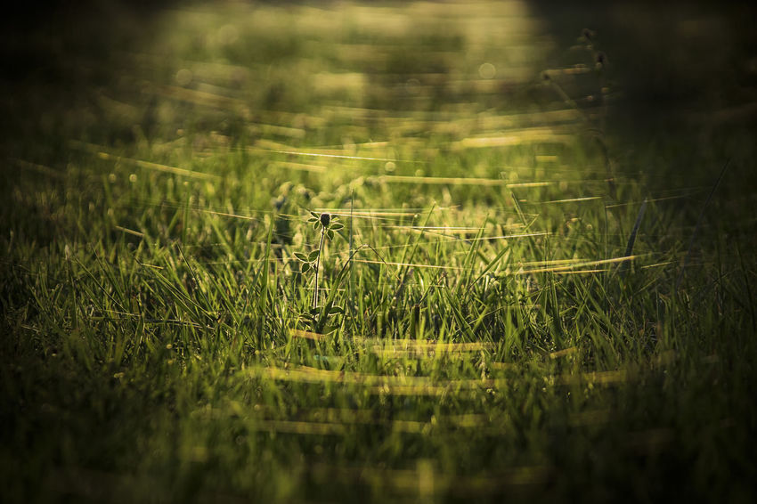 Selective Focus Plant Grass Growth Land Green Color Field Nature No People Beauty In Nature Day One Animal Tranquility Outdoors Sunlight Animals In The Wild Animal Animal Themes Landscape Vignette
