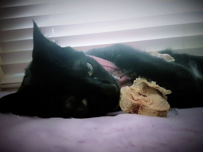 Cats Of EyeEm Cat Lovers Catoftheday Cats 🐱 Blackcatsofinstagram 😻my Sweety Cat😻 Blackcatsaregood Blackcatsaregoodluck Blackcatsclub Blackcatbeauties Eyeem Photography