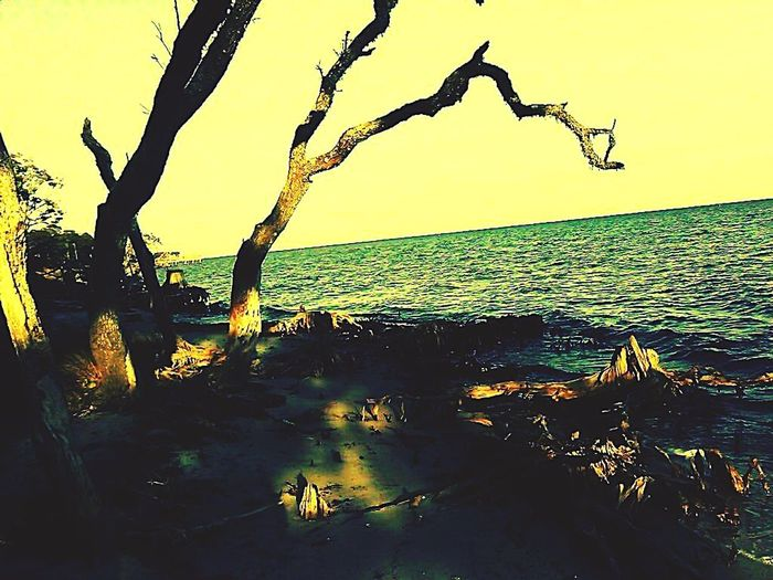 Sunset Silhouette Sea Nature No People Tree Outdoors Scenics Water Beauty In Nature Sky