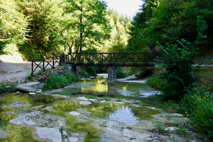 Wood bridge Beauty In Nature Bridge - Man Made Structure Day Footbridge Forest Growth Nature No People Outdoors River Scenics Sky Tranquil Scene Tranquility Tree Water