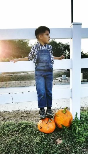 A boy in his overalls Autumn Fall Fall Beauty Pumpkin Boys Will Be Boys Boy Life Beautiful Orange Color Child Pumpkin Childhood Males  Full Length Boys Standing Sky Casual Clothing Trick Or Treat Calm Growing Children Preschooler Squash - Vegetable