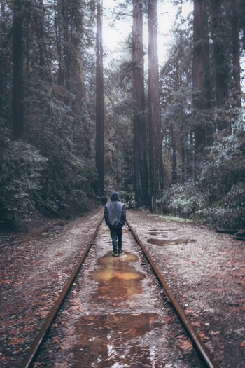 Adult Adults Only Beauty In Nature Day Forest Full Length Leisure Activity Lifestyles Men Nature One Man Only One Person Only Men Outdoors People Real People Rear View The Way Forward Tree Walking Warm Clothing Winter