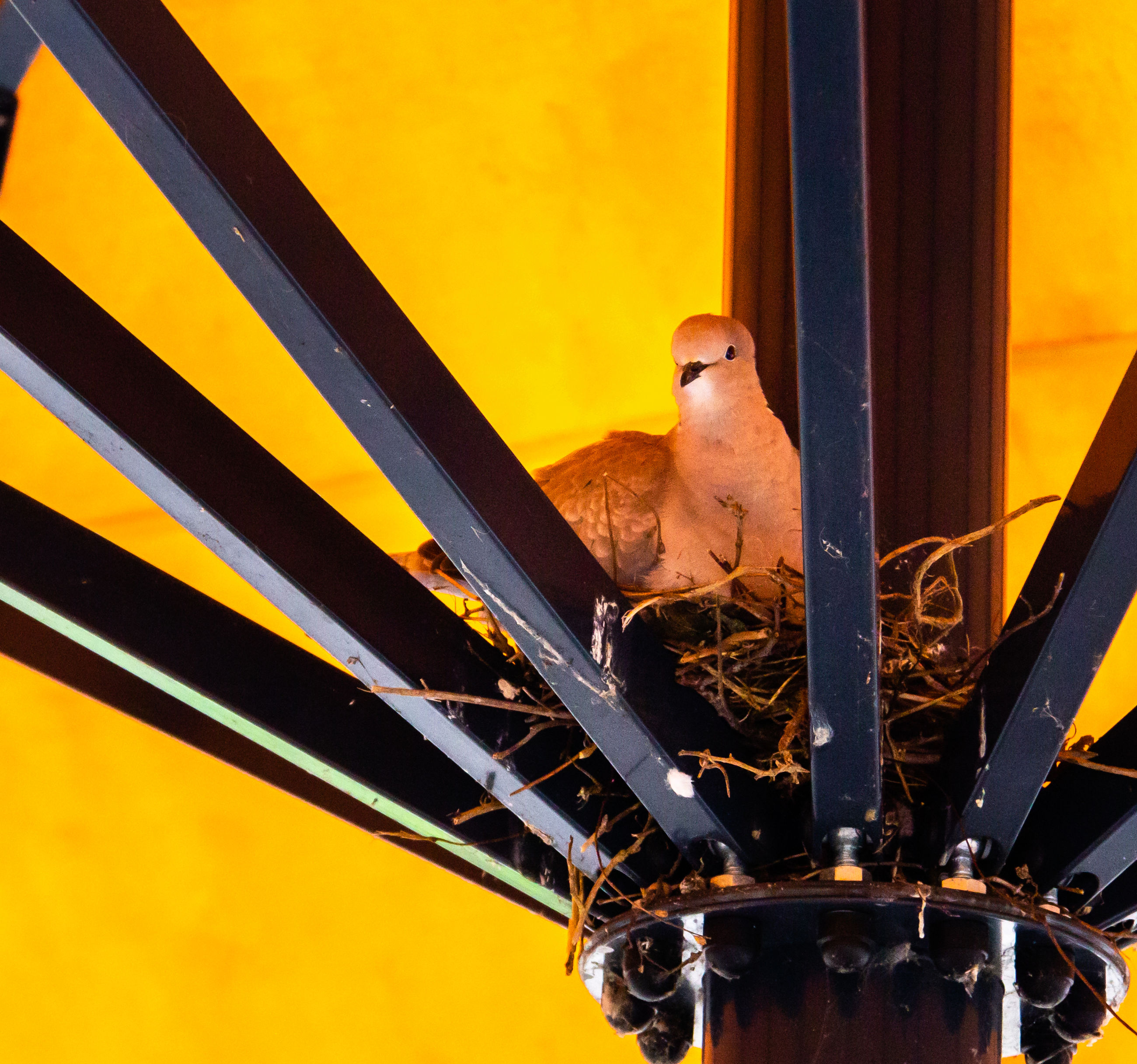 animal, animal themes, vertebrate, bird, one animal, no people, animal wildlife, animals in the wild, focus on foreground, perching, day, close-up, window, yellow, outdoors, low angle view, nature, orange color, glass - material, metal