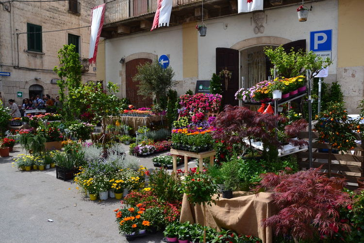 Potted plants at market stall