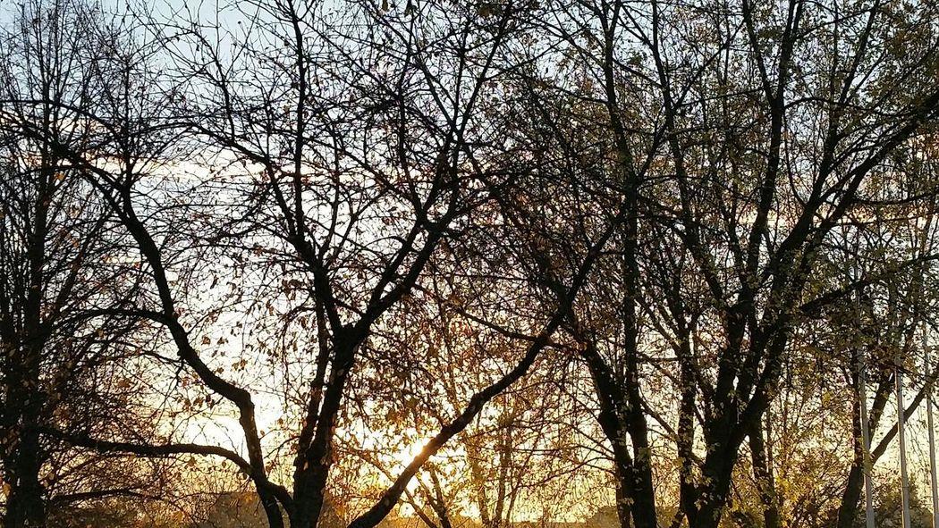 Sonnenaufgang sunlight Nature