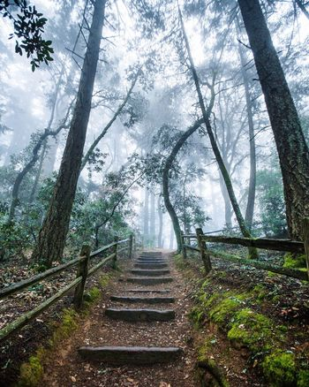 Wandered around before sunrise and found these steps. I never regret exploring. I always find something really beautiful to photograph. Stairs Fog Somber Moody Nature Stairs Find Lost Discover  Afraid Fear Forest Woods Creepy