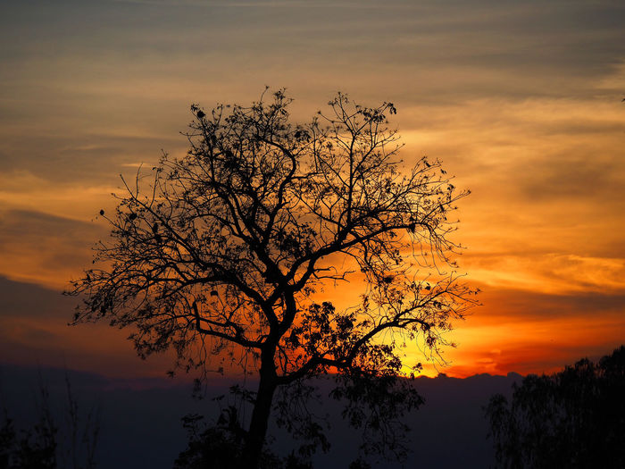 Beautiful sunset Beauty In Nature Branch Day Lone Majestic Nature No People Orange Color Outdoors Scenics Silhouette Sky Sunset Tree