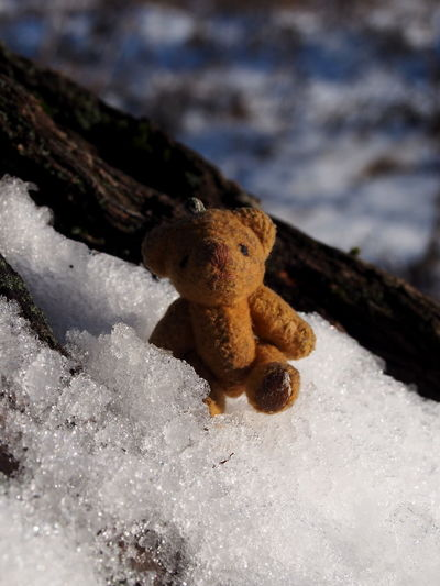 Close-up No People Nature Day Winter Selective Focus Focus On Foreground Cold Temperature Snow Toy Land Beauty In Nature Outdoors Beach Representation Growth White Color Teddy Bear Plant