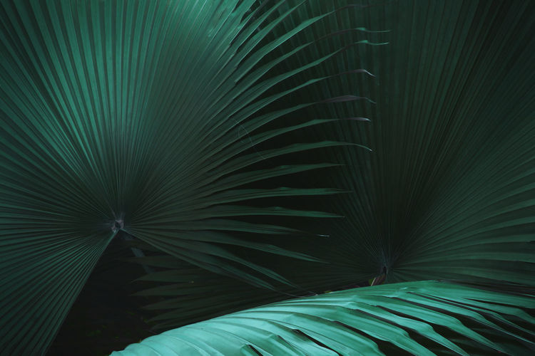 Exotic palm leaves in dark tone color natural pattern background