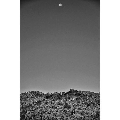 Scorched Earth . All of the Oak Trees were left standing after the Fire . They are all blackened and Dead . Wintersca Fireseason Wraggfire Moon Landscape Monotone Blackandwhite