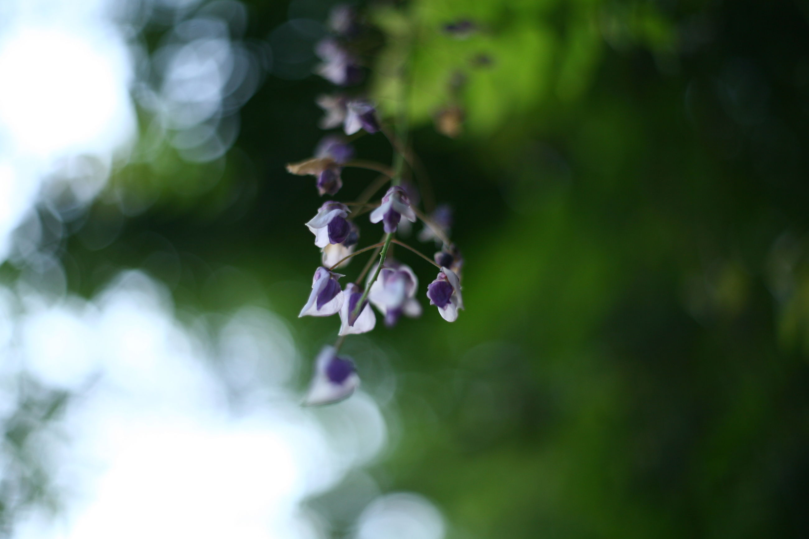nature, growth, flower, beauty in nature, purple, fragility, outdoors, no people, focus on foreground, freshness, day, plant, close-up, blooming