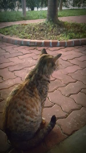 Cats Cats Of EyeEm MyCatMyLove Backview Posing Simple Outdoors Meow Beauty In Nature EyeEmNewHere