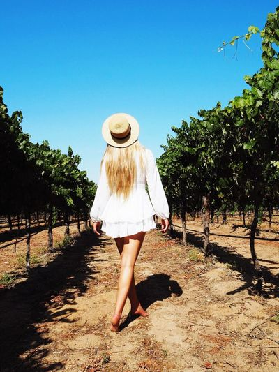 Rear view of woman walking amidst plants at vineyard against clear sky