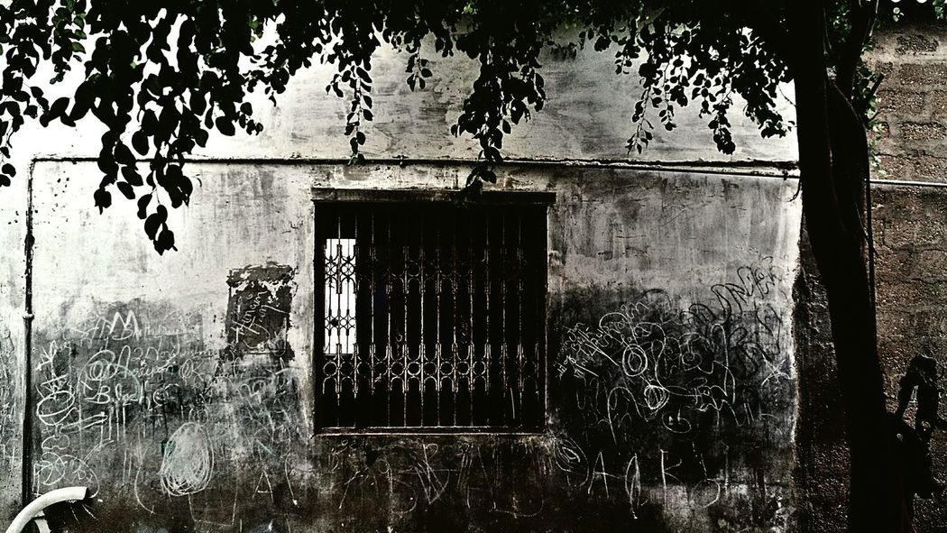 Window Day Tree Outdoors Mobile Photography EyeEm Best Shots EyeEm Gallery Vibrant Color Mobilephotography.de Eyeemphotography Karachi Pakistan Karachi EyeEm EyeEmBestPics Home Is Where The Art Is