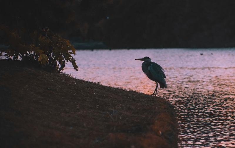 Bird perching on a wood