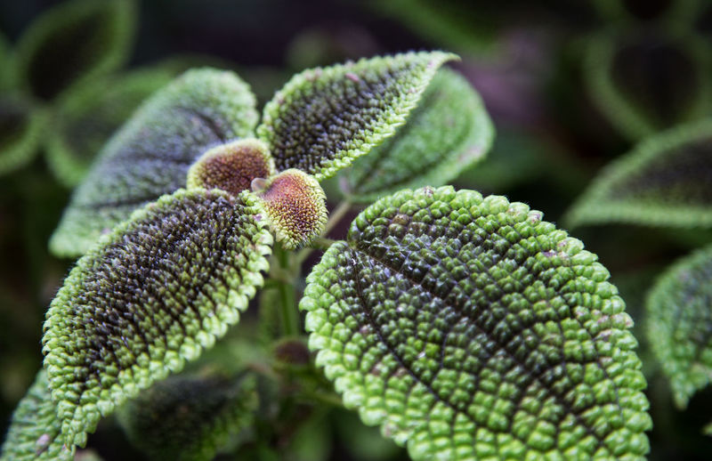 Macro shot of green leaves on plant