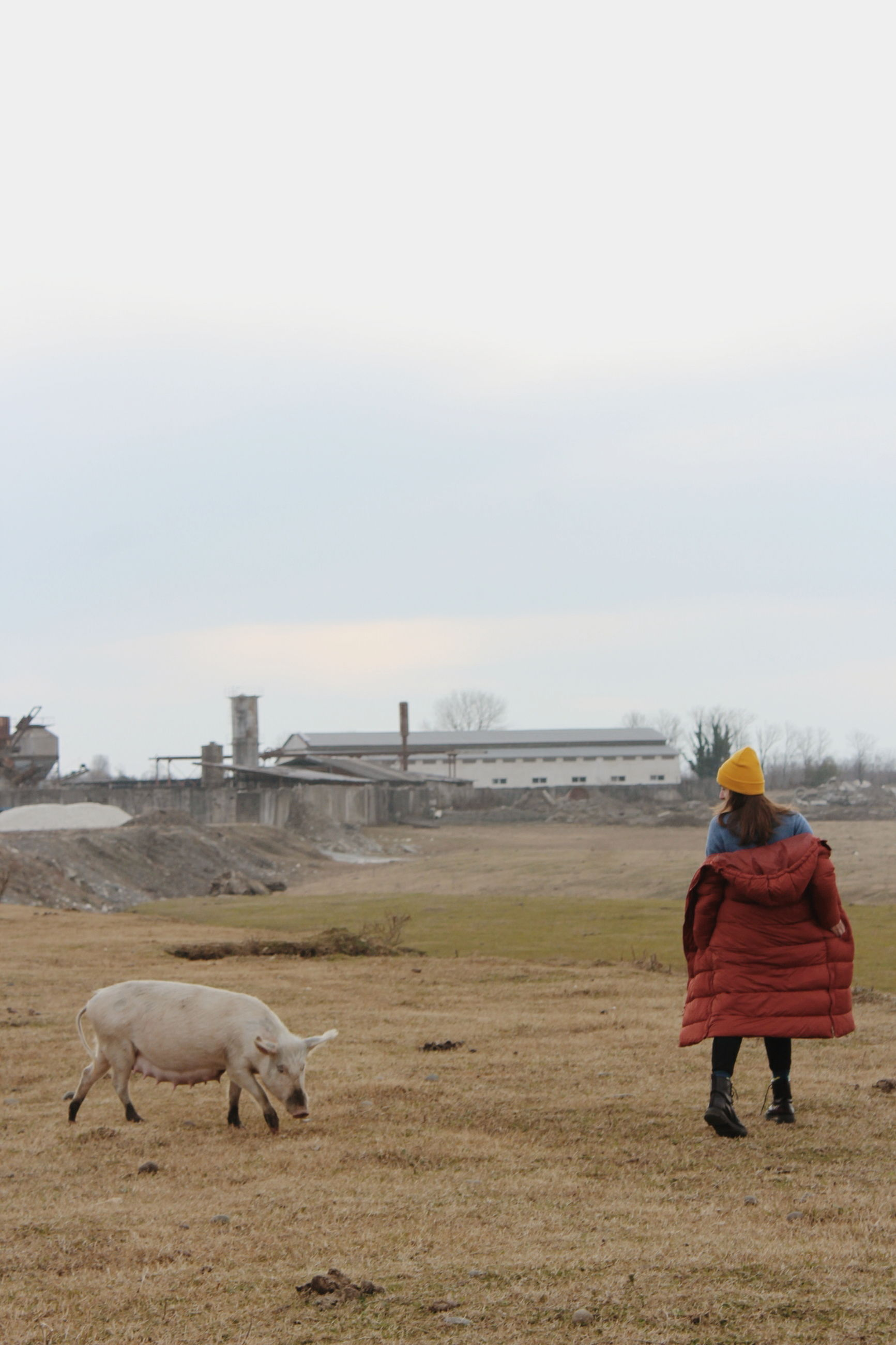 sky, animal themes, field, animal, mammal, land, nature, domestic animals, domestic, pets, real people, livestock, environment, landscape, vertebrate, day, rear view, fog, one person, group of animals, outdoors, hood - clothing