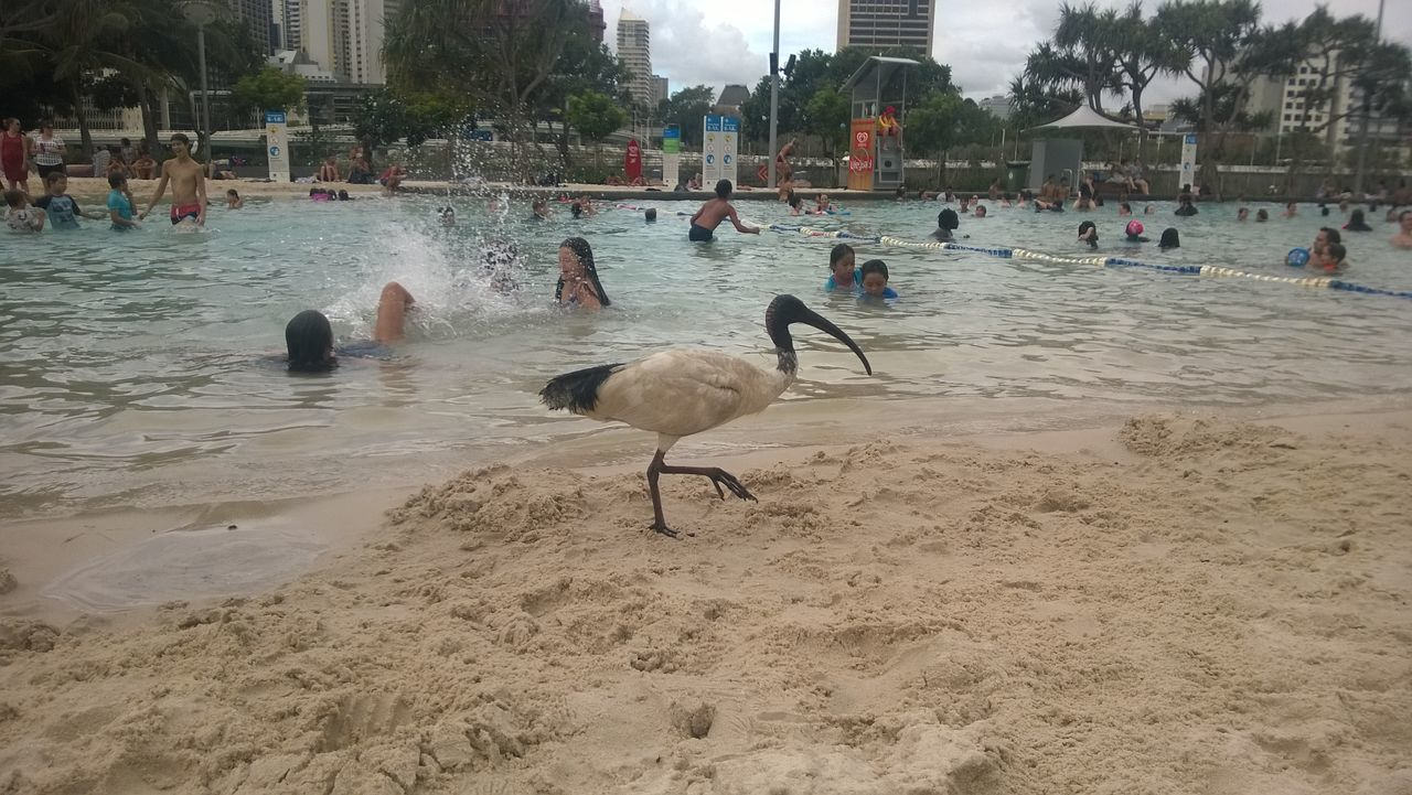 bird, animals in the wild, sand, water, real people, built structure, architecture, day, animal wildlife, large group of people, men, beach, outdoors, nature, building exterior, swan, people