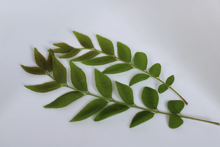 Close-up of green leaves on white table