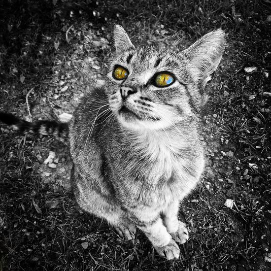 Ojos que hipnotizan... Animal Themes Feline Beauty In Nature The Week On EyeEm Thoseeyes Cateyes CatEyeEm Hipnotic Black&white Ojosqueven Throughmyeyes Sitting Eyedetails Coloureyes Cat Portrait Animal Eye Pet Portraits Paint The Town Yellow