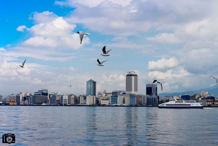 Animal Themes Animals In The Wild Architecture Bird Building Exterior Built Structure Bursa City City Life Cityscape Development Famous Place Flying Istanbul Izmir No People Outdoors Residential District Seagull Turkey Turkishfollowers Urban Water Waterfront Wildlife