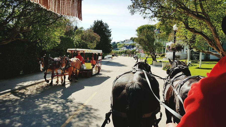 Carriage ride, Macinac Island, MI. Macinaw Carriage Ride The Traveler - 2015 EyeEm Awards Samsung Galaxy S6 Edge Samsungphotography