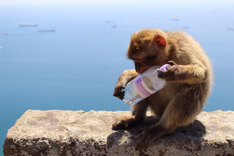 Monkey Sitting On Retaining Wall By Lake