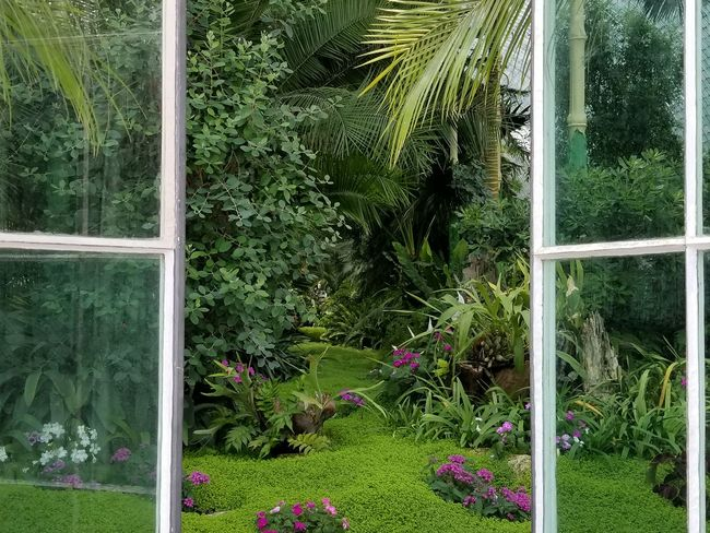 A view through the doors of the Glasshouse at Lednice Castle. Ways Of Seeing Czech It Out Czech Republic UNESCO World Heritage Site Flowers Indoors  Viewpoint Perspective Point Of View Serene Lednice Europe Glasshouse Horticulture Botanical Garden Glass - Material Window View Open Door Opening Palm Tree Frond Tropical Tree Greenhouse Grass Botanical Greenery Lush Plant Life
