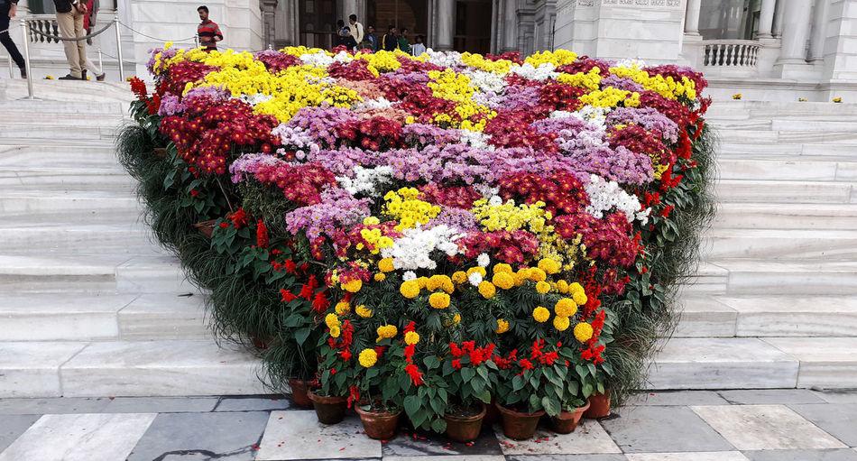 View of flowering plants