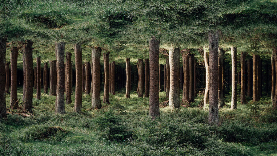 Digital composite image of trees growing in forest